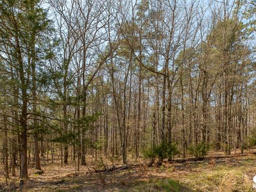 Wooded Acreage Just Outside City : Mena : Polk County : Arkansas