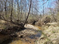 Wooded Lot : Meherrin : Prince Edward County : Virginia