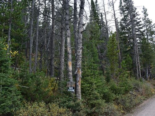 Pines At Elk Ridge Estates Lot 11 : Dubois : Fremont County : Wyoming