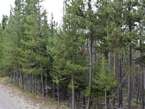 Pines At Elk Ridge Estates Lot 17 : Dubois : Fremont County : Wyoming
