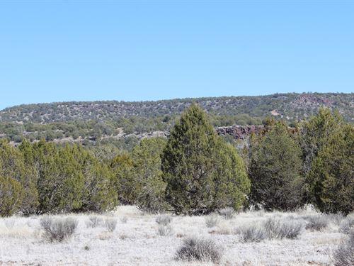 Over 40 Acres, Borders State Land : Seligman : Yavapai County : Arizona