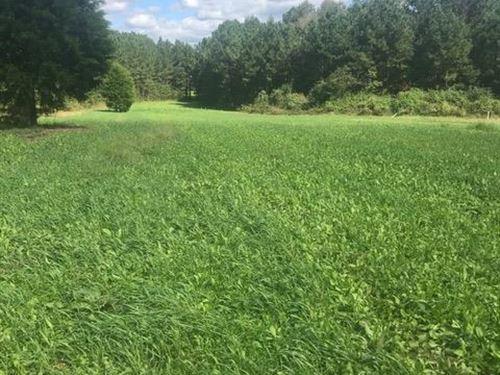 Abundant Wildlife Timber/Investment : Jarratt : Greensville County : Virginia