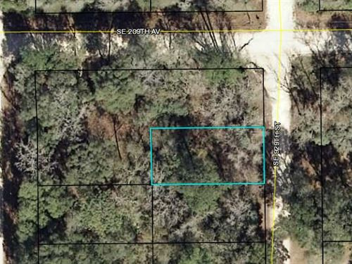 Great Lot, Dixie County, Fl : Dixie County : Dixie County : Florida