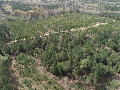 Southern Arkansas Pine Timberland : Rosston : Nevada County : Arkansas