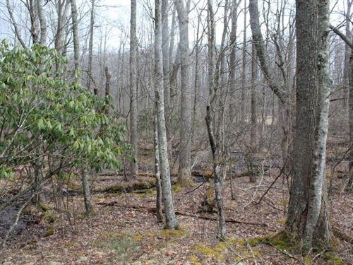 Land In Floyd County, Virginia : Stuart : Patrick County : Virginia