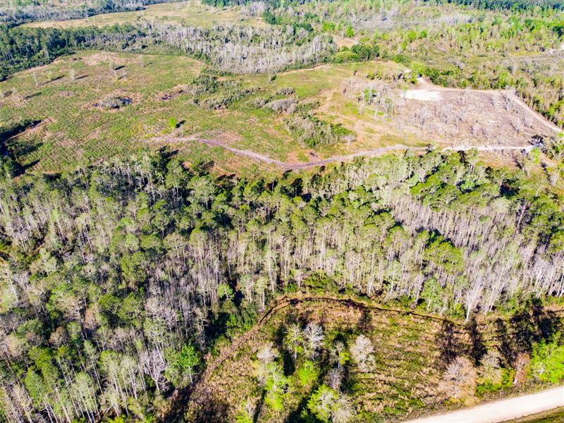 Timber / Hunting Near Tallahassee : Monticello : Jefferson County : Florida