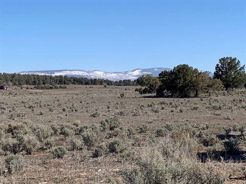 Ranch Hunting Permits Northern NM : Cebolla : Rio Arriba County : New Mexico