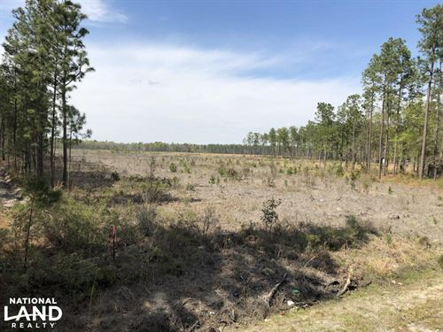 Pineland Firetower Rd 20 ac Recreat : Pineland : Jasper County : South Carolina