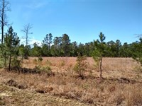 260 Acres, Georgetown County, Sc : Georgetown : Georgetown County : South Carolina