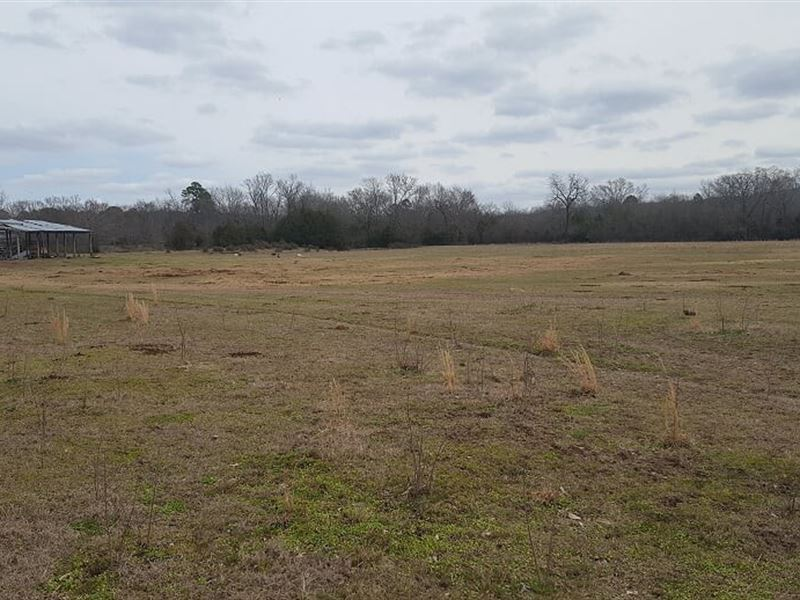 Recreational Land For Sale : Clayton : Pushmataha County : Oklahoma