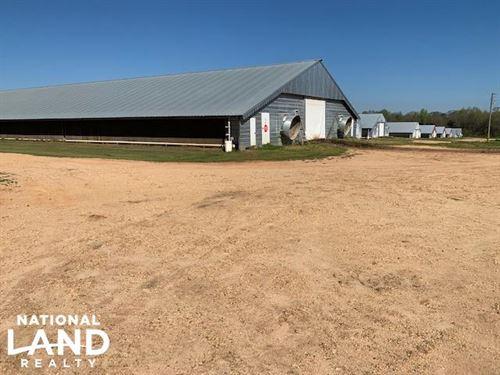 Chicken Farm : Collins : Covington County : Mississippi