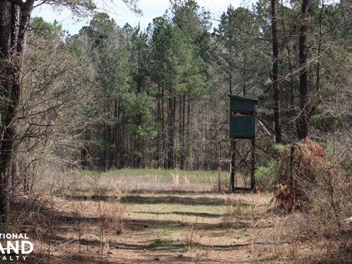 Brier Creek Hunting Tract : Matthews : Jefferson County : Georgia