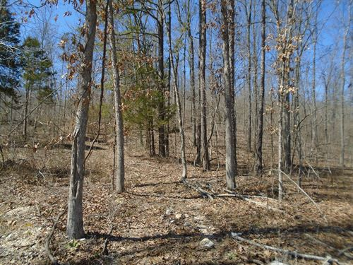 4 Wooded Acres Southeast Missouri : Centerville : Reynolds County : Missouri