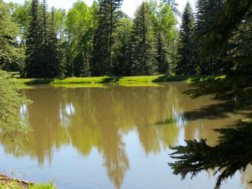 Aspen Meadows & Ponds Ranch : Dolores : Montezuma County : Colorado
