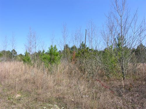 51 Acres North Burke County : Blythe : Burke County : Georgia