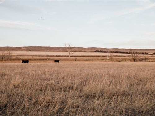 Bayard Farm, Ranch, And Wildlife : Bayard : Scotts Bluff County : Nebraska