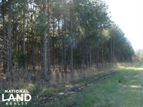 Timber And Hunting Tract : Devalls Bluff : Prairie County : Arkansas