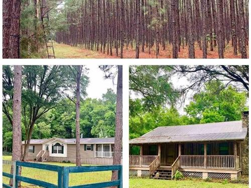 Timber Land, Hunting-2 Homes-61 : Newberry : Alachua County : Florida