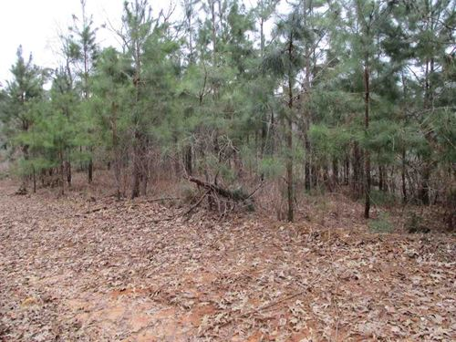 8 Acres McNairy County Great : Bethel Springs : McNairy County : Tennessee