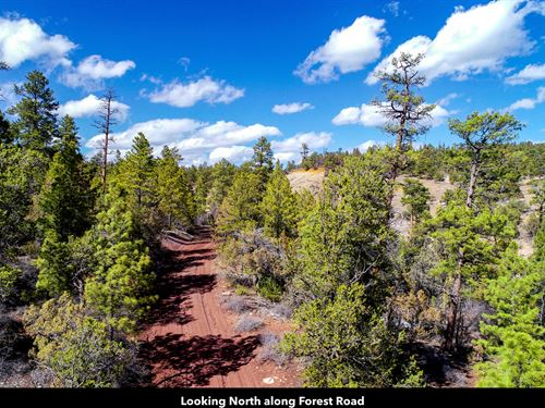 20 Acres Bordering National Forest : Grants : Cibola County : New Mexico