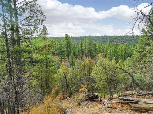 Mountain Land Near National Forest : Grants : Cibola County : New Mexico