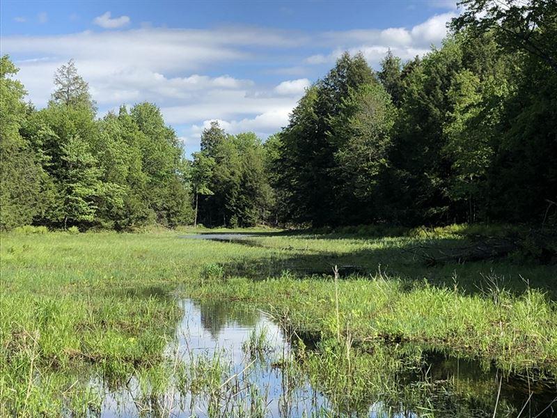 Carleton Pond And Woodlands : Camden : Oneida County : New York