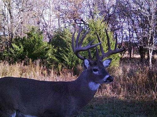 54 Acres Along Onion Creek Just So : Coffeyville : Montgomery County : Kansas