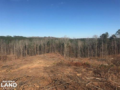 Jackson Road Hunting Tract : Vernon : Lamar County : Alabama