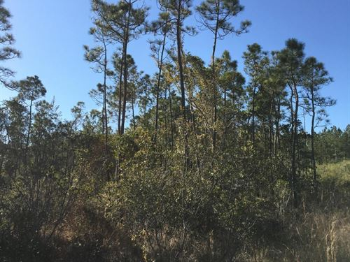 54 Acres of Timber, Hunting And Rec : Chatom : Washington County : Alabama