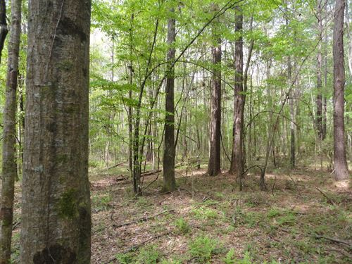 Wooded Land Lincoln County Bogue : Bogue Chitto : Lincoln County : Mississippi