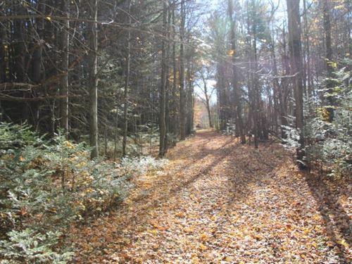 Michigan Hunting Land Deer Bear : South Branch : Ogemaw County : Michigan