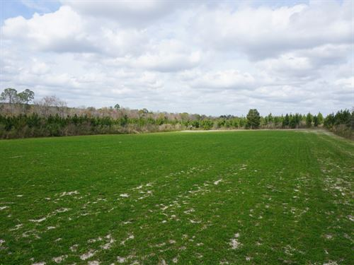 Sugar Creek Timberlands : Eastman : Dodge County : Georgia