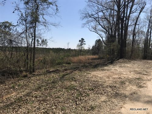 26.6 Ac, Young Pine Timberland Wit : Columbia : Caldwell Parish : Louisiana