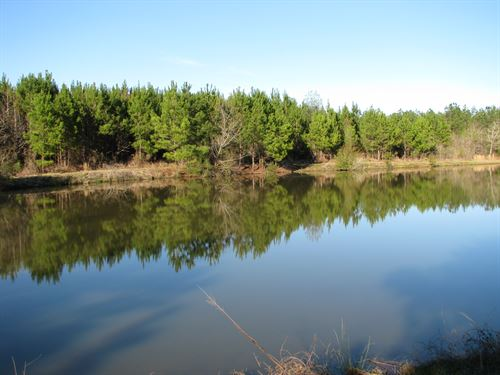 Nice Pond And Great Hunting : Camden : Wilcox County : Alabama