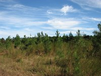 Monticello Forest : Dillwyn : Buckingham County : Virginia