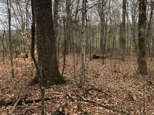 Excellent Hunting, Homesite : Hustonville : Lincoln County : Kentucky