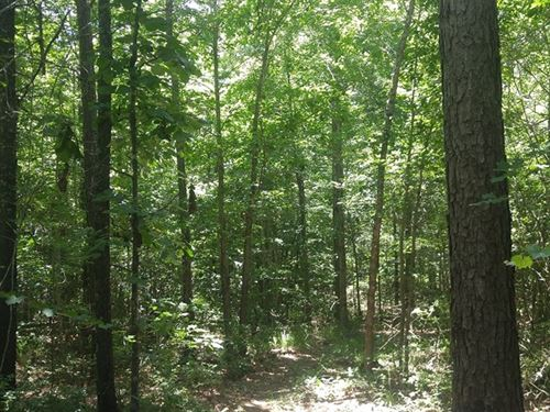 Brackman Tract : Doddridge : Miller County : Arkansas