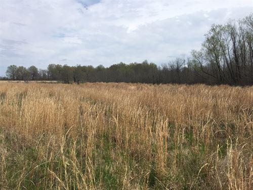 Hunting Land Close to Dave : Reyno : Clay County : Arkansas