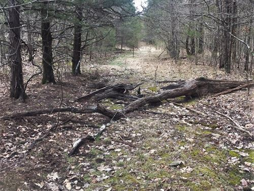 Wooded 156 Acres Tract Atv Trails : Yellville : Marion County : Arkansas