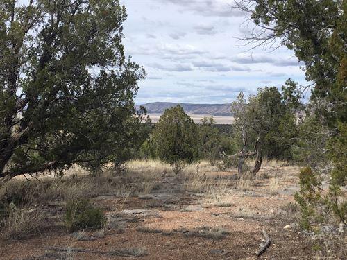 Land With Big Trees And Big Views : Seligman : Yavapai County : Arizona