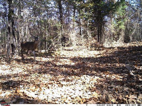 Hunting Property In Kemp, Texas : Kemp : Kaufman County : Texas
