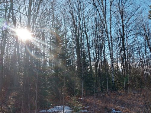 Ultimate Hunting Property 250 Acres : Atlanta : Montmorency County : Michigan