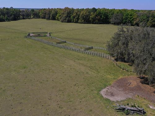 Suwannee County Pastureland : McAlpin : Suwannee County : Florida