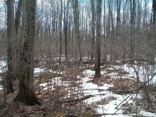 220 Acres of Prime Whitetail Count : Glen Flora : Rusk County : Wisconsin