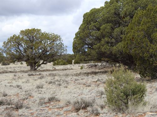 40 Acres Mountain Property Seligman : Seligman : Yavapai County : Arizona