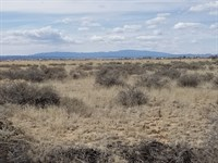NM Torrance County Lot Horses : Moriarty : Torrance County : New Mexico