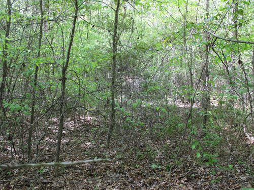 Heavily Wooded Hunting Tract Home : Gladewater : Smith County : Texas