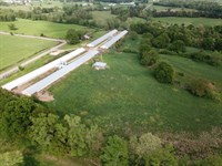 Emanuel Farm-Broiler & Cattle Farm : Lineville : Clay County : Alabama