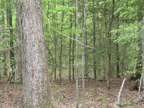 Mc Cue Road Tract : Danville : Wilkinson County : Georgia
