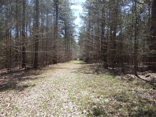 Couchwood Road Tract, Webster Pari : Cotton Valley : Webster Parish : Louisiana